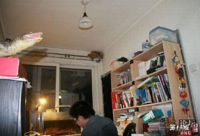 Домашний лемур (6 фото)