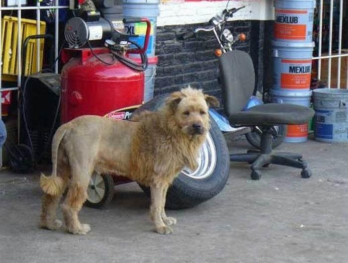 Лев или...? (2 фото)