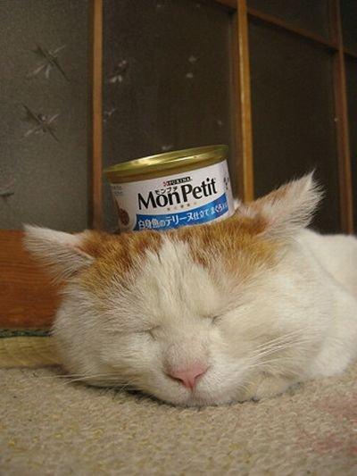 Еще один кот, который любит спать. (4 фото)