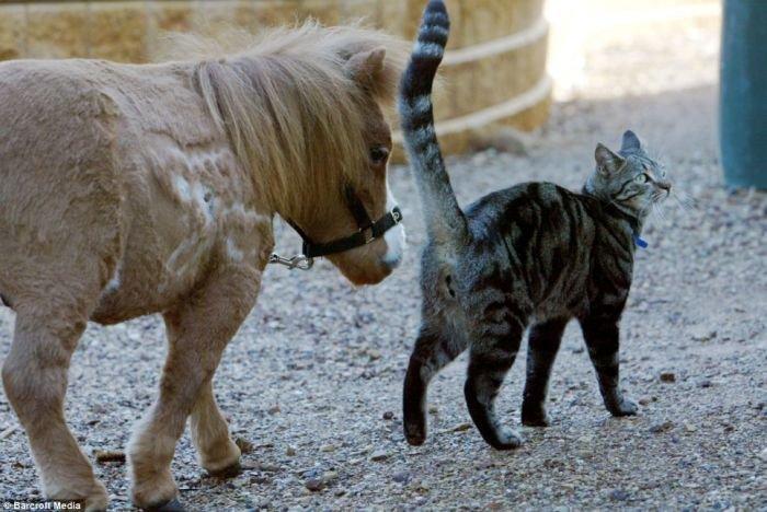 Очень маленькая лошадка (4 фото)