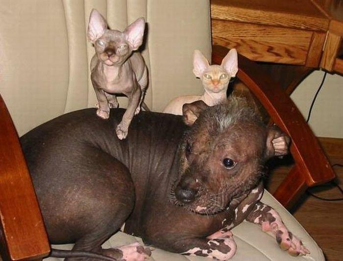 Кошки и собаки (55 фото)