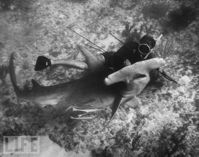 Акульи пасти (25 фото)