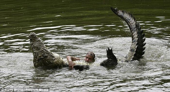 Дрессированный крокодил (4 фото)