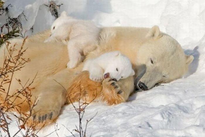 Люди против животных (38 фото)