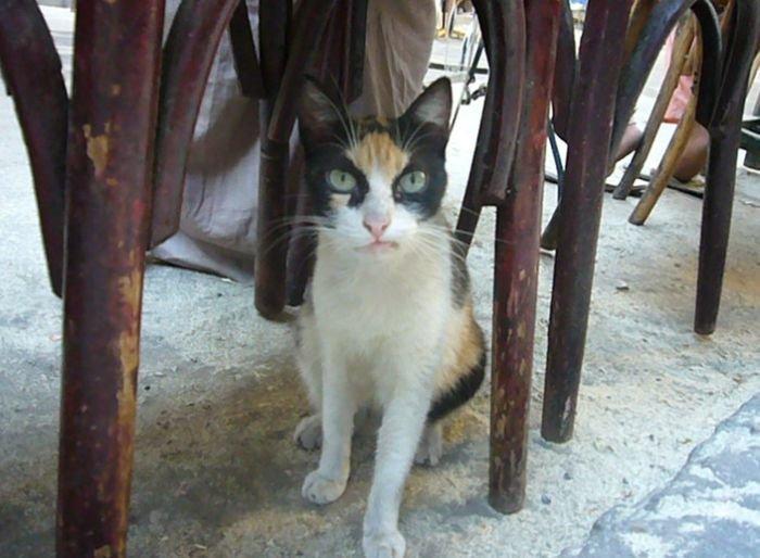 Сердитый кот (4 фото)
