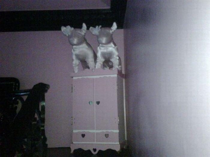 Дом собачек Пэрис Хилтон (12 фото)