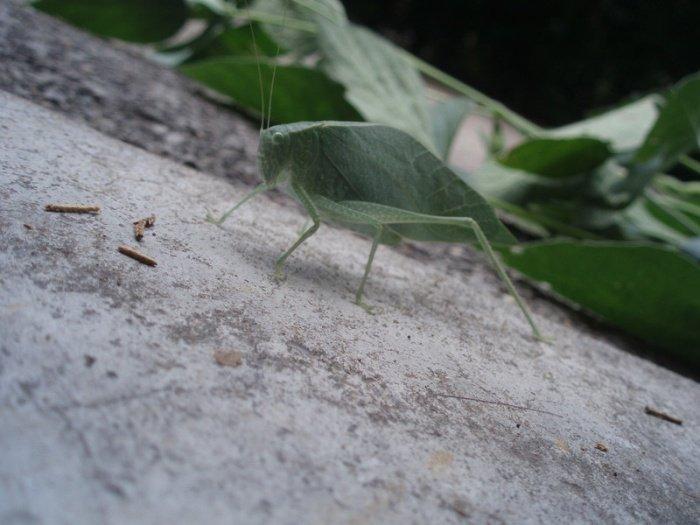 Найдите на фотографии жука (3 фото)