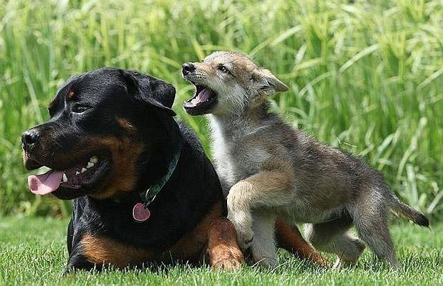 Животные дружат (27 фото)