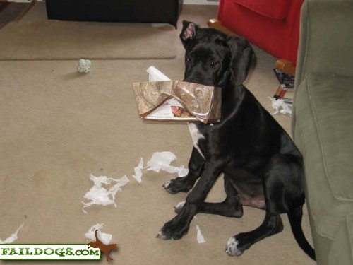 Неправильные собаки (69 фото)