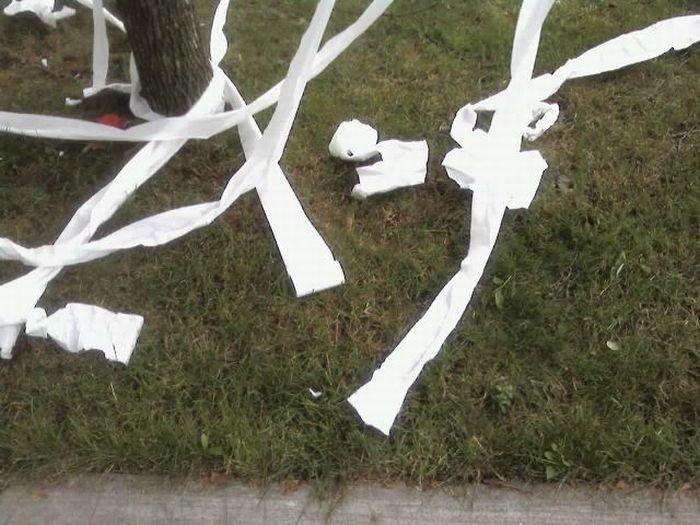 Прикол с туалетной бумагой (11 фото)