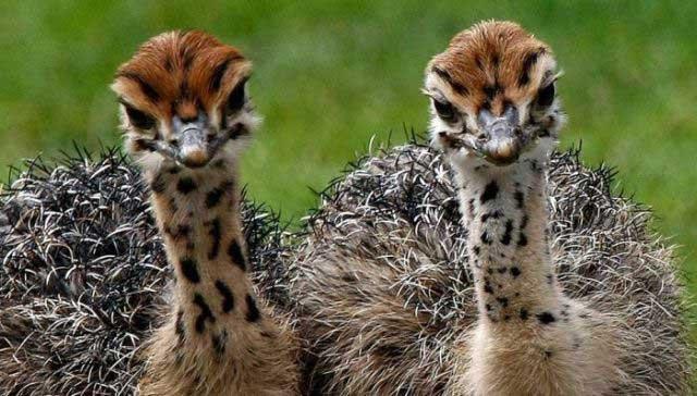 Прикольные животные (41 фото)