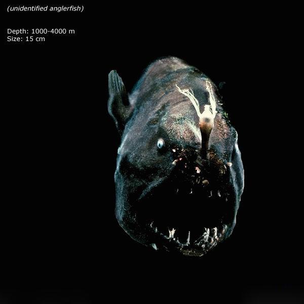 Чудовища из морских глубин (20 фото)