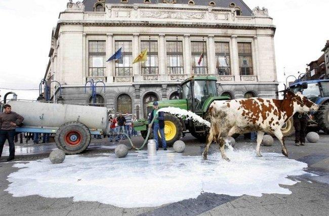 Молочный протест (6 фото)