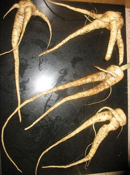 Овощи странной формы (23 фото)