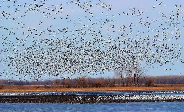 Что такое - много птиц (8 фото)
