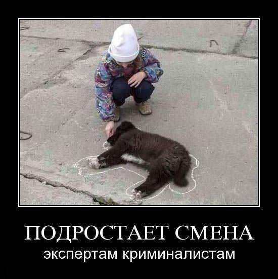 Свежие картинки с подписями (85 фото)