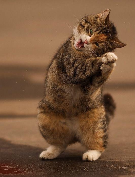 Позитивный кот (8 фото)