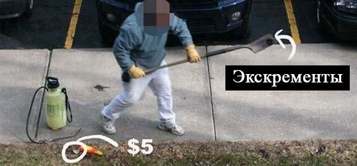 5 долларов и какашка (8 фото)