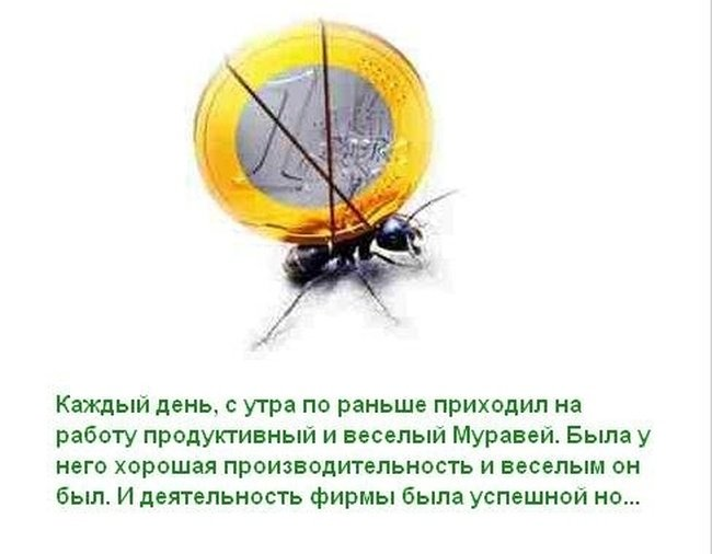 Про муравья (12 фото)