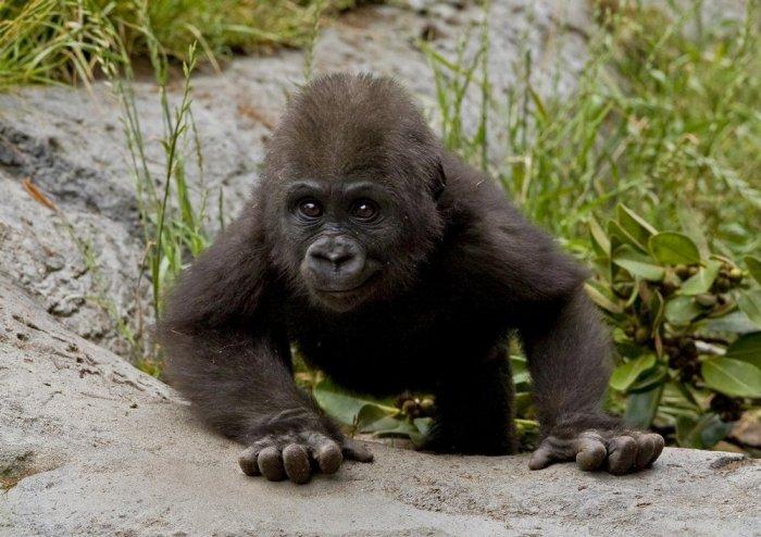 Подарок для обезьянки (3 фото)