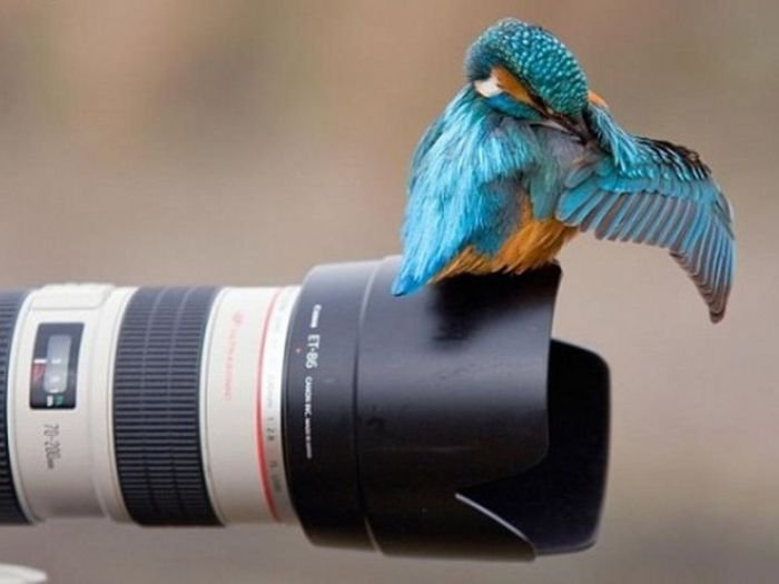 Фотоподборка вторника! (146 фото)