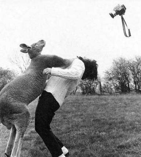 Люди и животные (19 фото)