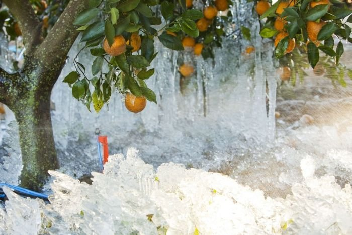 Ледяной дождь во Флориде (12 фото)