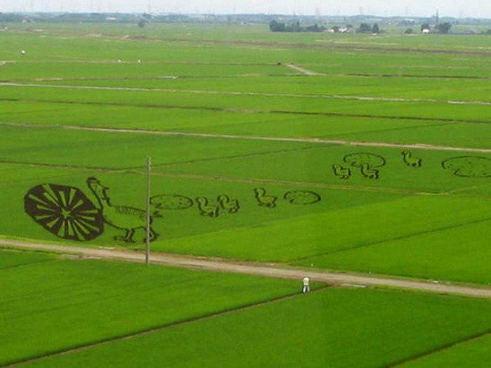 Рисунки на рисовых полях (14 фото)