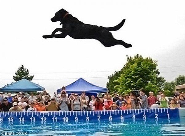 Соревнования по прыжкам собак (4 фото)
