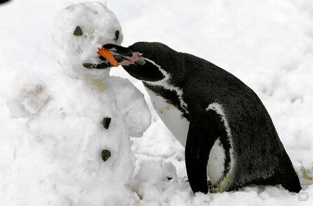 Прикольные фотографии животных (43 фото)