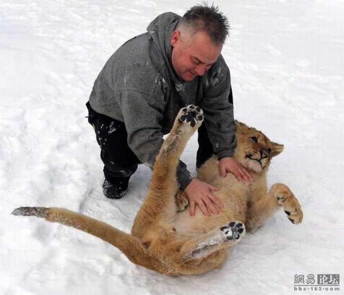 Дружба человека и льва (9 фото)