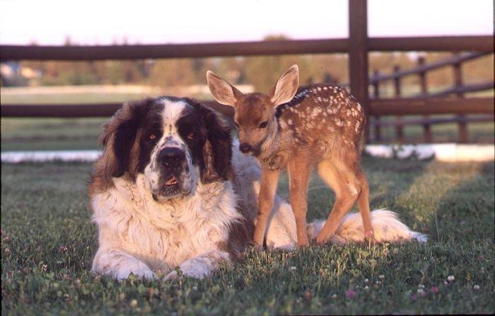 Дружба животных (50 фото)