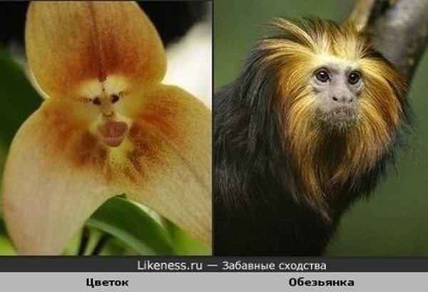 Забавные сходства (99 фото)
