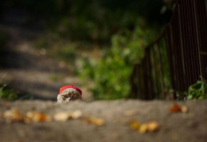 Фотоподборка понедельника! (157 фото)
