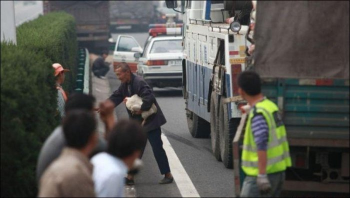 Авария грузовика, перевозившего кур (4 фото)