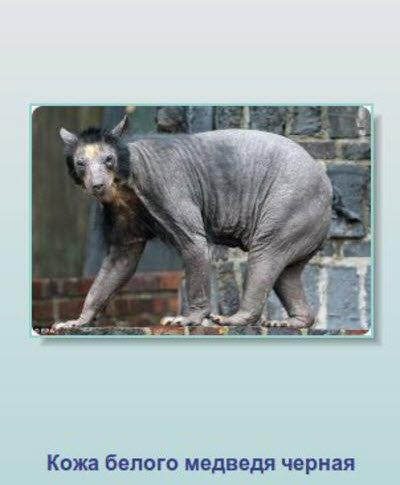 Интересные факты о животных (24 фото)