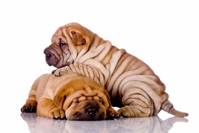 Собаки расслабляются (16 фото)