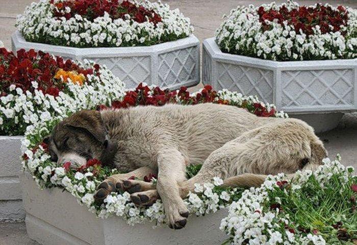 Спят усталые зверушки (21 фото)