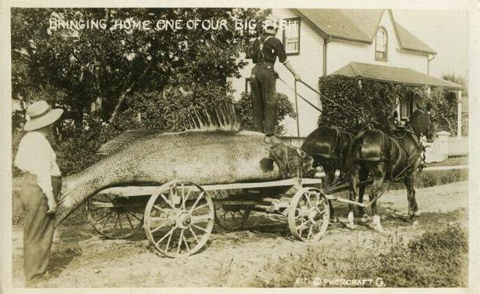 Открытки-фотомонтаж начала конца 19 века (73 фото)