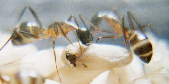 Как рождается муравей (10 фото)