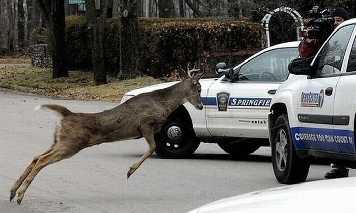 Животные против машин (23 фото)