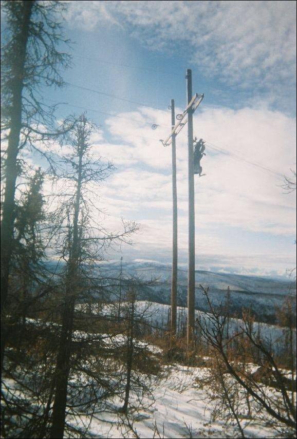 Олени-скалолазы (4 фото)