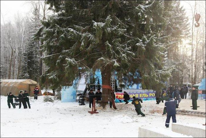 Как спилили кремлевскую елку (16 фото)