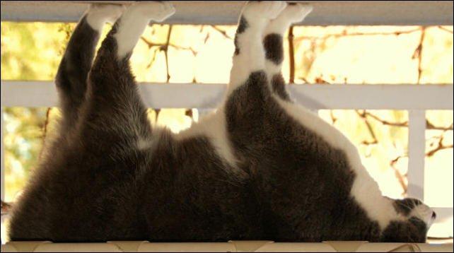 Забавные коты (49 фото)