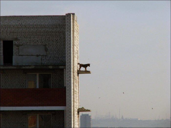 Собака на выступе здания (3 фото)
