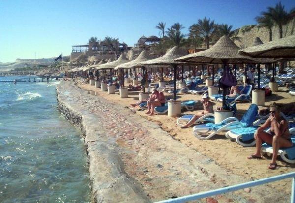 Акула-убийца в Египте (5 фото)