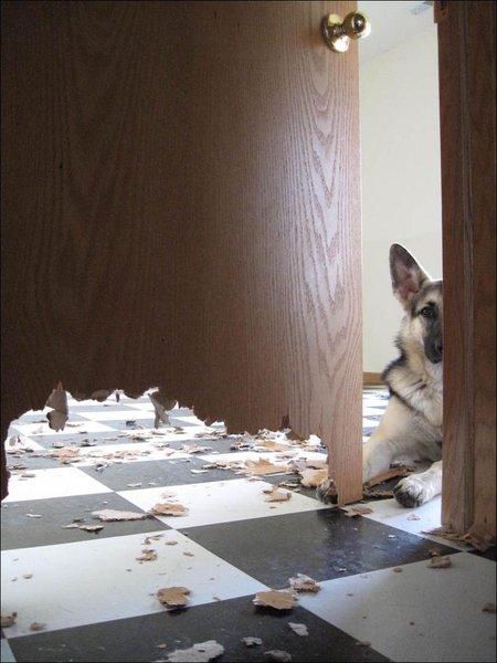 Добрый пес (2 фото)