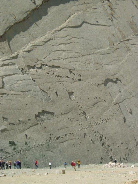Стена динозавров (7 фото)