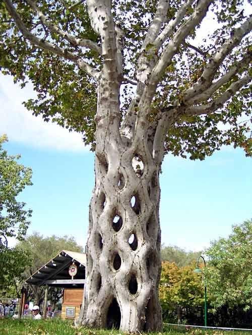 Странные деревья (17 фото)