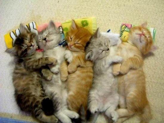Прикольные фотографии котов (141 фото)